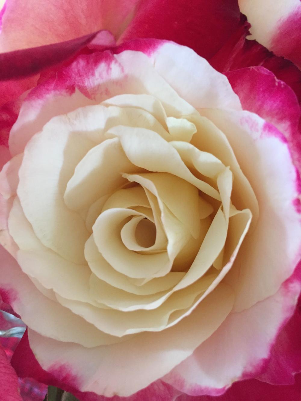 Flower-4-Poster_printfile_default_18x24.png