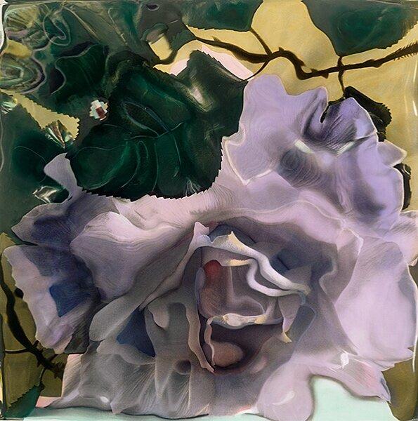"""Rose Unfurled"""