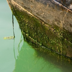 Fouling on a Ship hull. Image by graham_B.