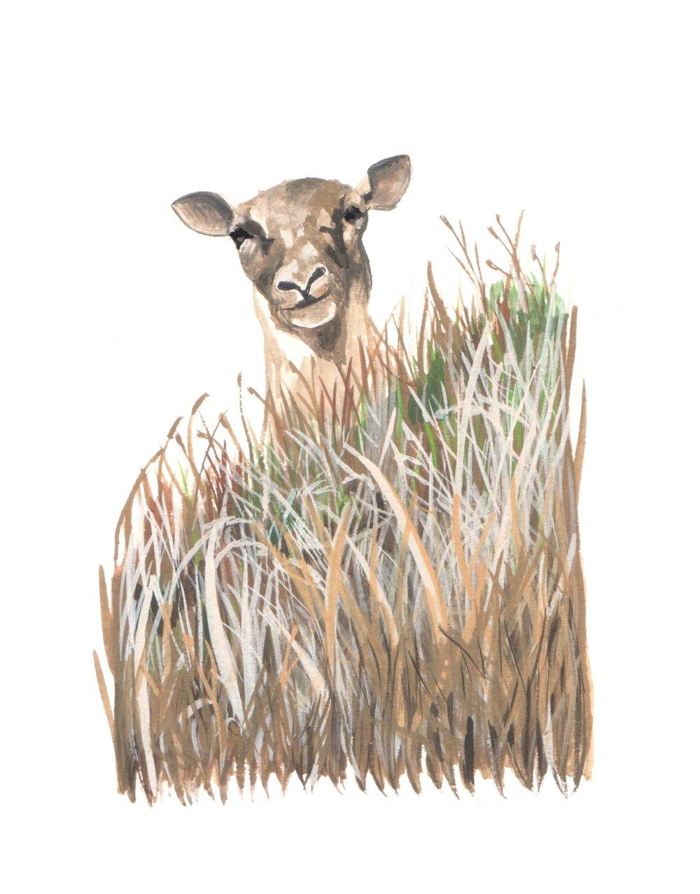 Peeking Ewe
