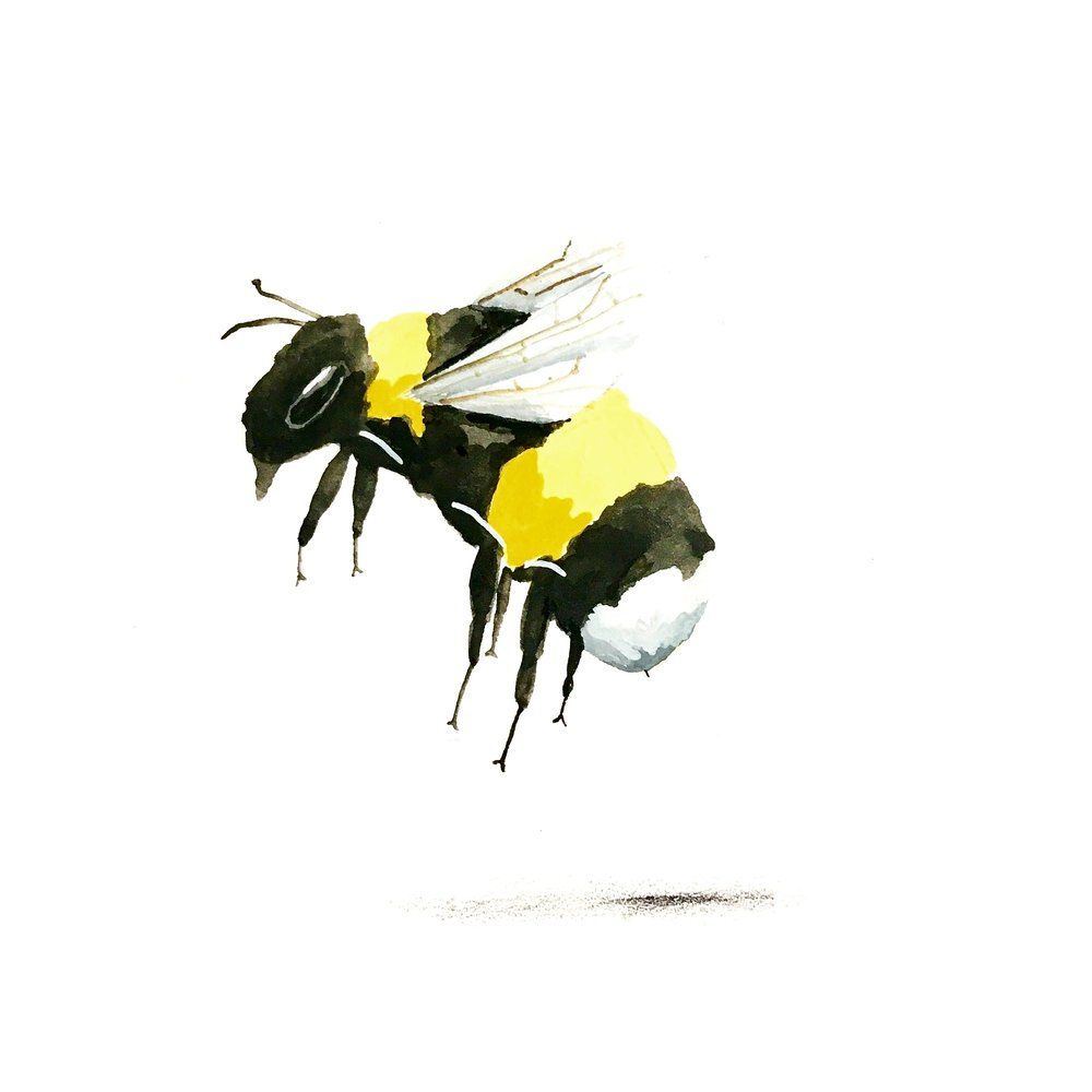 Bee for Manchester