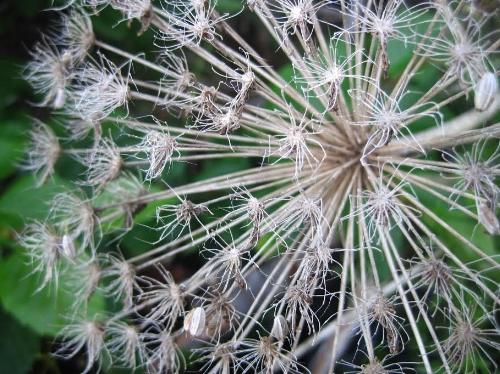 Wildflower 3.jpg