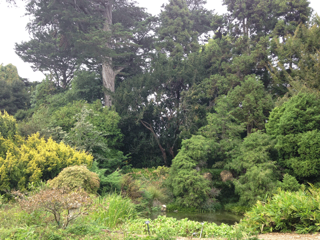 san francisco botanical gardens