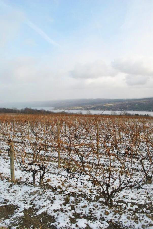 Finger Lakes Vineyard by Karen of WanderustingK