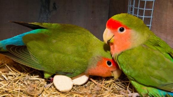 Bild aus glücklichen Tagen: Hier hat so ein Hundesohn gnadenlos die damaligen Love Birds Angelina und Brad kurz nach der Geburt der Zwillinge gepappt... siehe SOB, siehe papped. Man beachte: Damals trug das Paar noch Partnerlook!