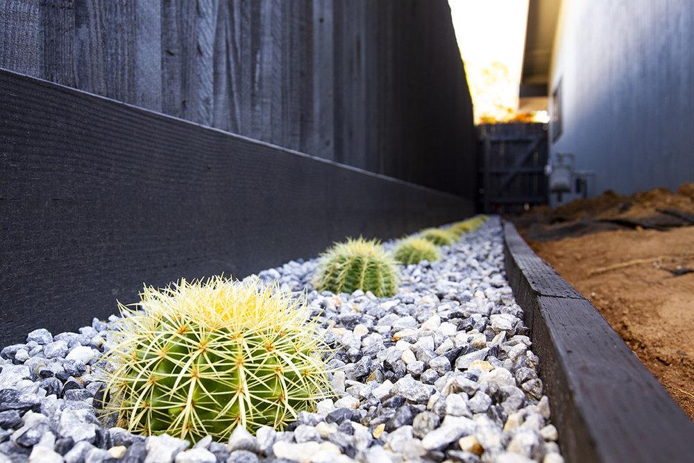 MCM_SideYard_Cactus.jpg