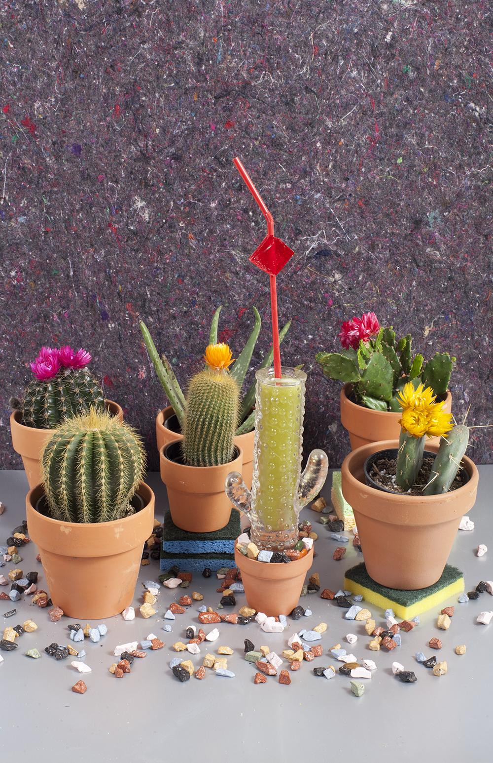 Cactus Cooler cropped-WEB.jpg