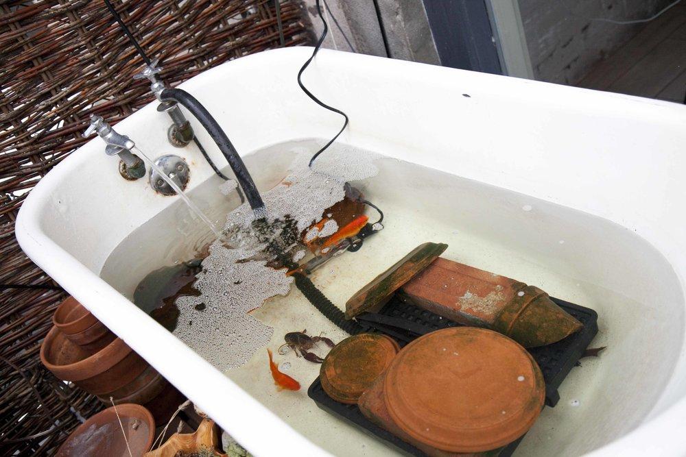The backyard houses egg-laying quail, seasonal produce, and a bathtub of crawfish and fish.