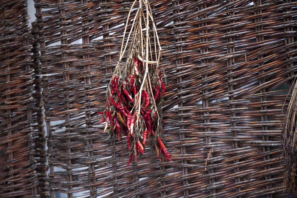 Pasilla chilis  are hung to dry in Olmsted's backyard.