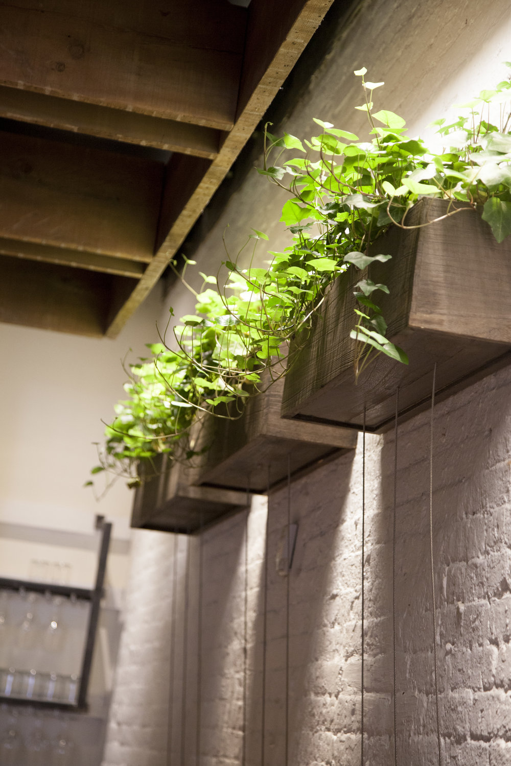 The entryway and walls of the restaurant are lined with overhead baskets of ivy.