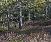 bowditch-mt-trail.jpg