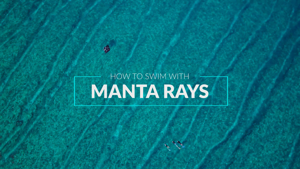 How to Swim with Mantas_English Version_Website Thumbnail.jpg