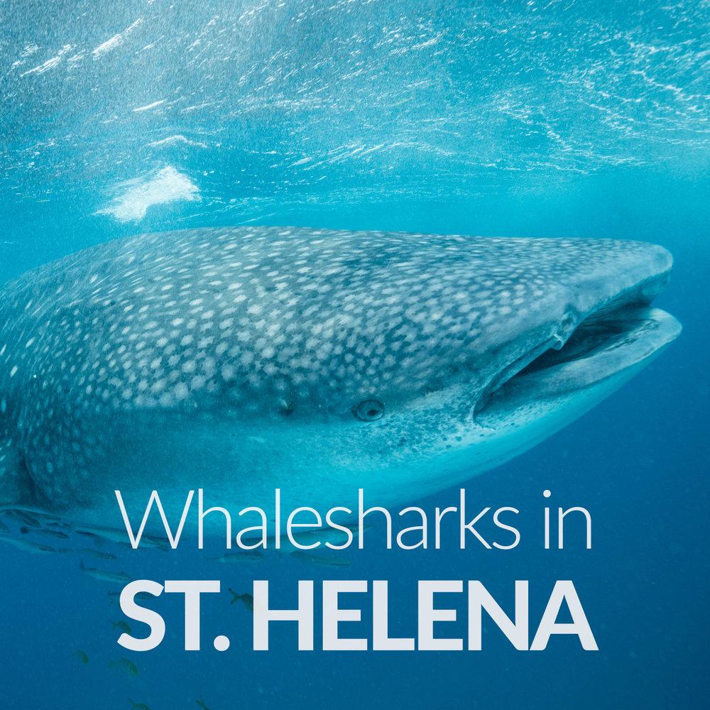 DannyUnderwater_Guided Trips_Upcoming Adventures_St Helena.jpg