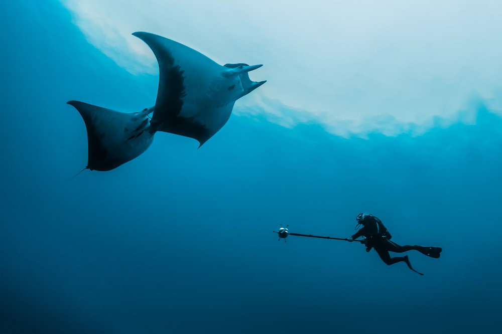 Danny Copeland filming devil rays with the underwater 360 rig.
