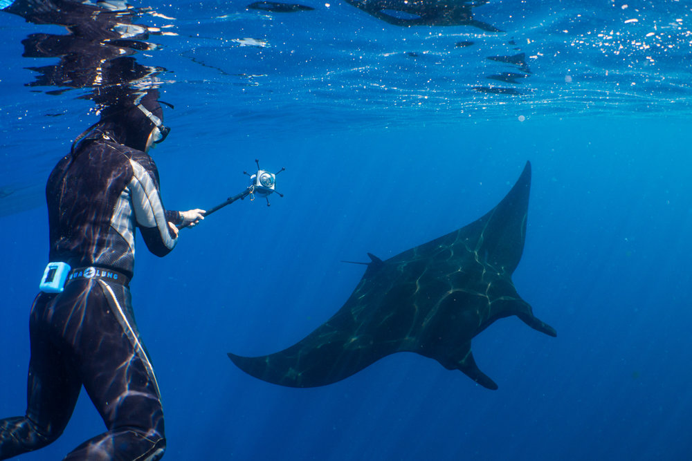 Danny filming an oceanic manta in 360 during a chance encounter on one of the first days of the shoot.