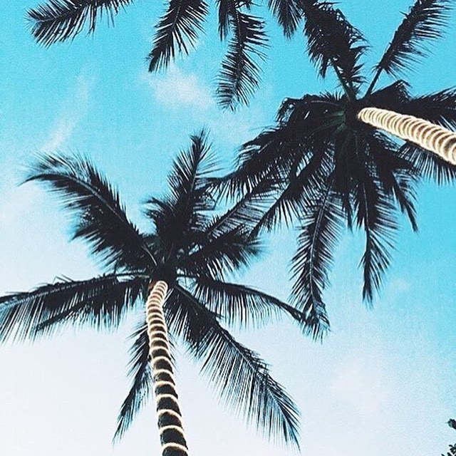 Life in the tropics. Via @momentaryhappiness