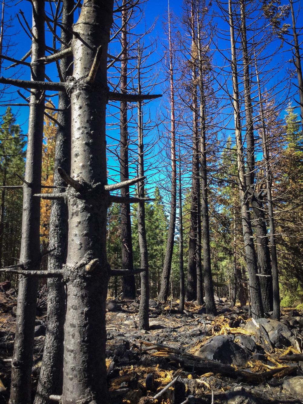 rim-fire-2013-yosemite-us-forest-service.jpg