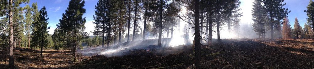 Not reaching crown fire status, the ground fire becomes self-cancelling after thinning work at the UC Berkeley Sagehen Creek Field Station, 2016