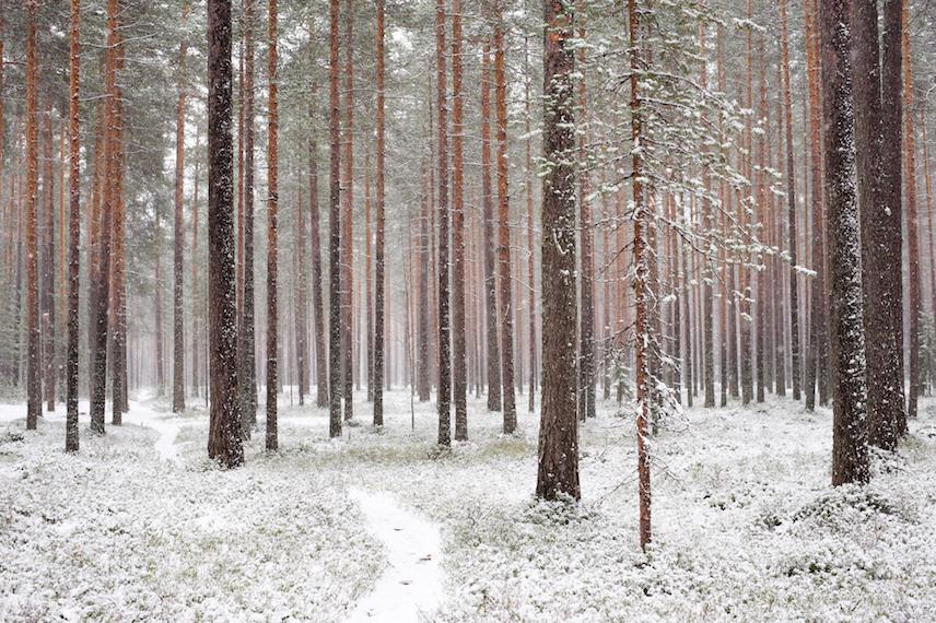 Luontolaulu_talvimetsä copy.jpg