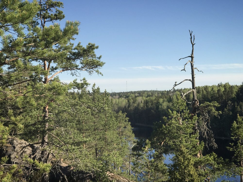 Our favorite Forest Sound Walk location Meiko Wilderness Area is only 30min drive away from Helsinki.