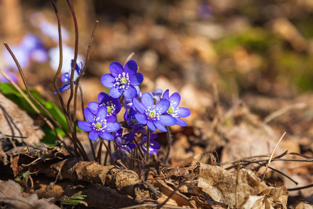 Kevät - Toukokuu