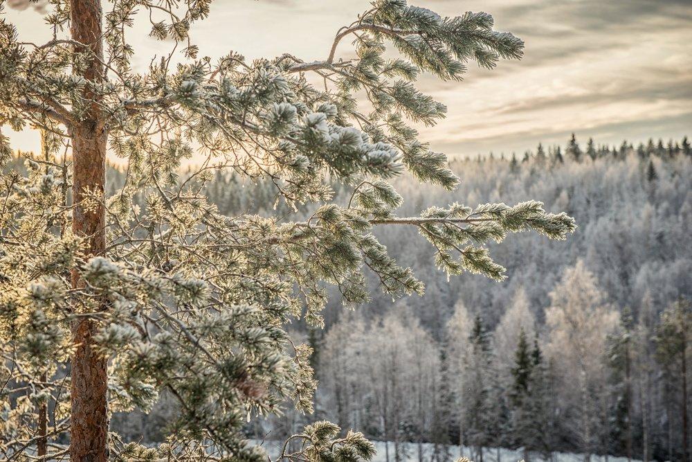 Frosty Winter - January - March