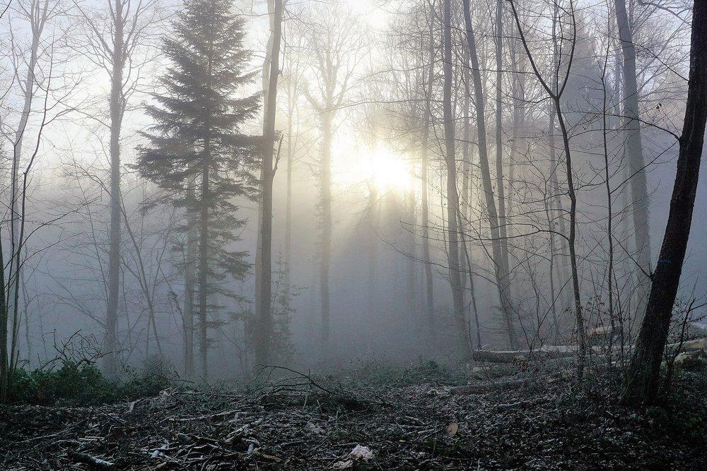 forest-1929953_1920.jpg