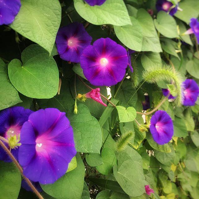 Bloom wherever you're planted this week. 🌸 #BeNotable #mondaymotivation #morningglory #riseandgrind #onedayatatime #keepitup #lifeisbeautiful #flowers