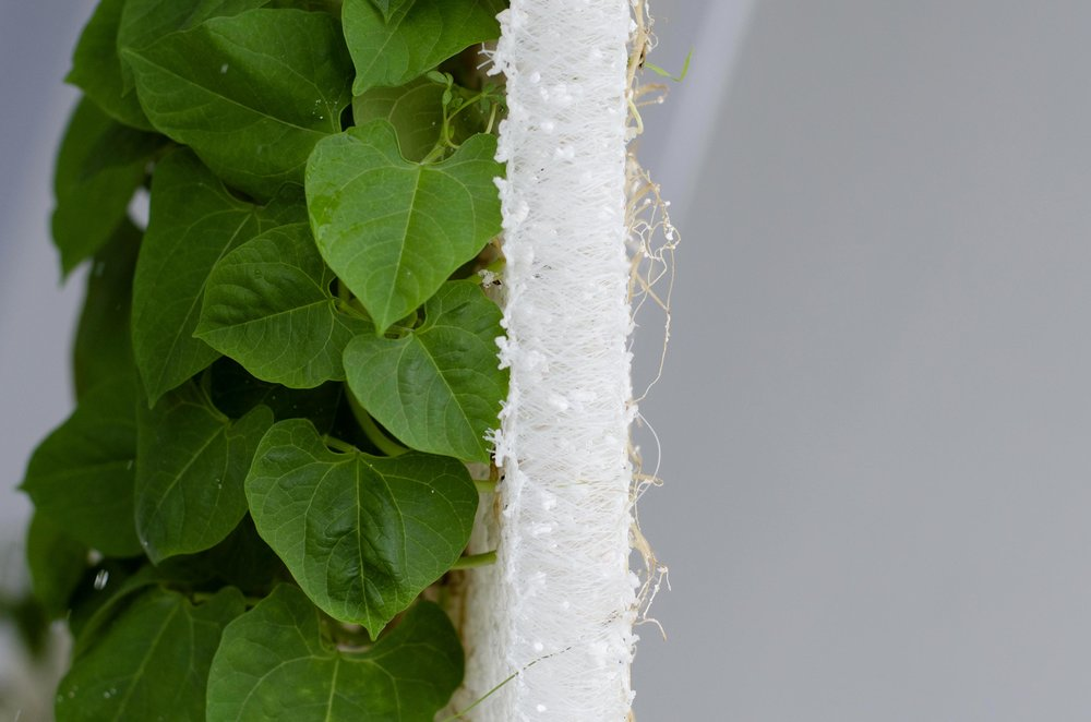 Hydroponic Growing Fabric -