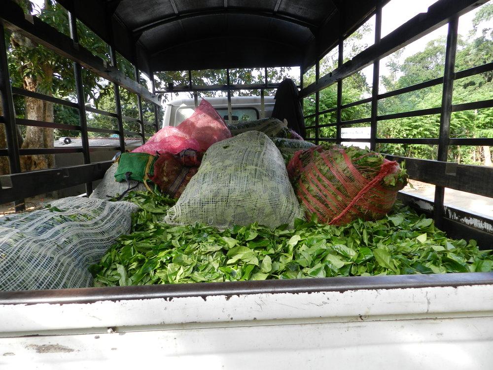 29 inside back of tea lorry copy.JPG