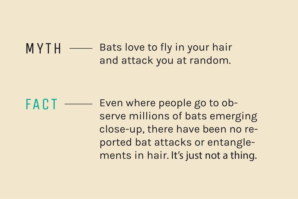 myth-v-fact-01.png