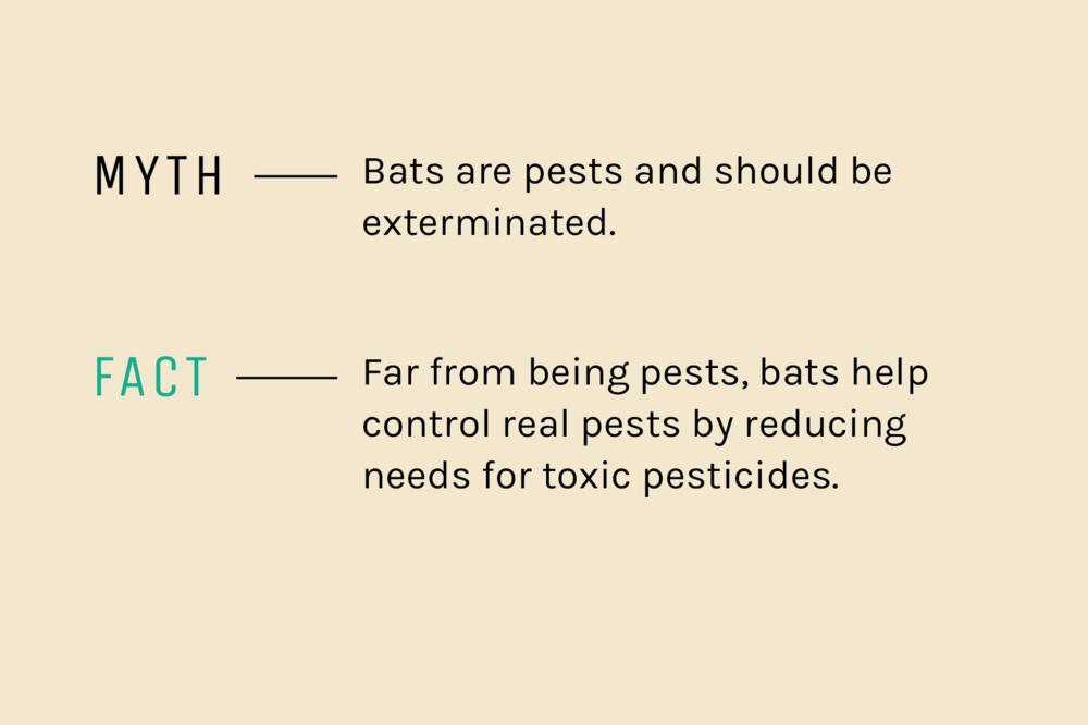 Fact-Myth-5.png