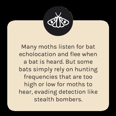 fact-moth.png