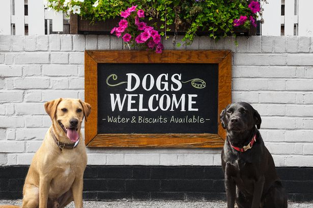 Dog-friendly-pubs.jpg