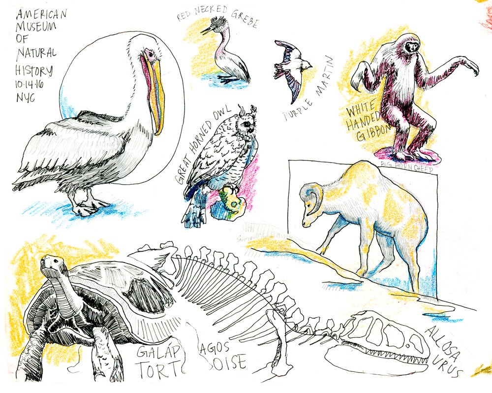 AMNH NYC Sketches.jpg