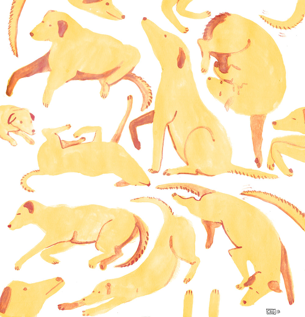 Yellow dogs.jpg