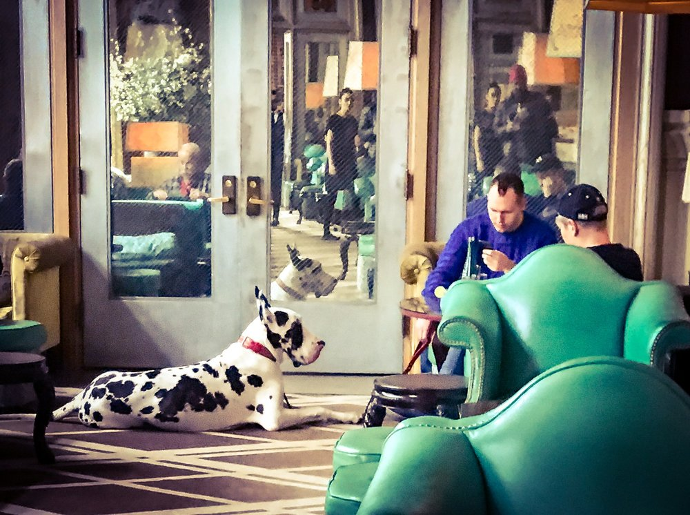 you can even find a small horse masquerading as a great dane lounging in the hotel bar at the Soho Grand