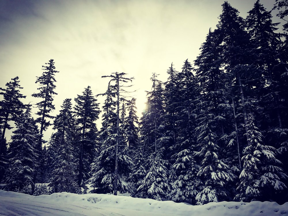 The drive over Mt Hood proved to be its own snowy adventure
