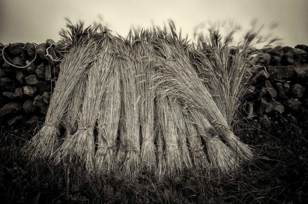 Rye sheaves with wall