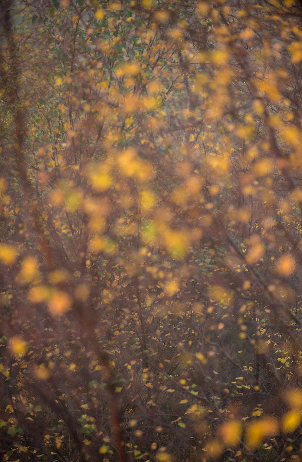 autumn Calder-3.jpg