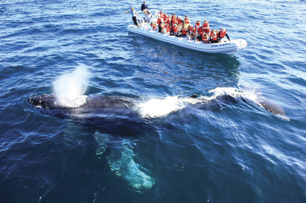 Things To Do On A Boat   Magestic whale watching tours   I wanna go!