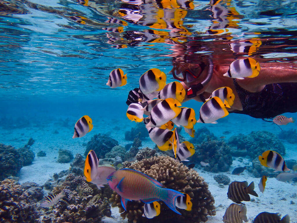 Things To Do Underwater   Epic snorkel tours   Explore colors