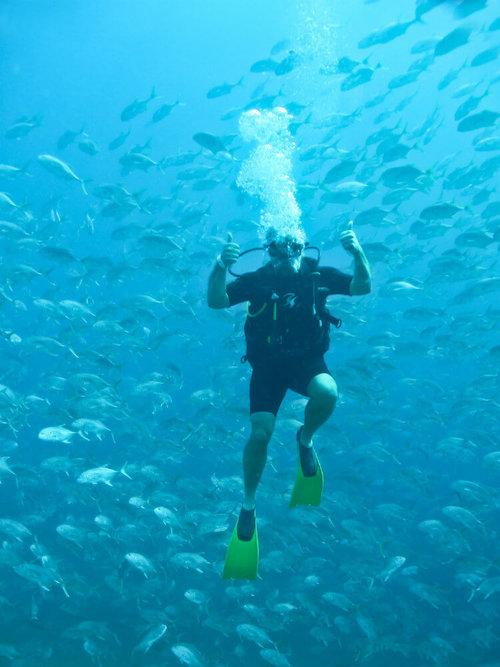 Padi Scuba Diver Certification Things To Do In Puerto Vallarta