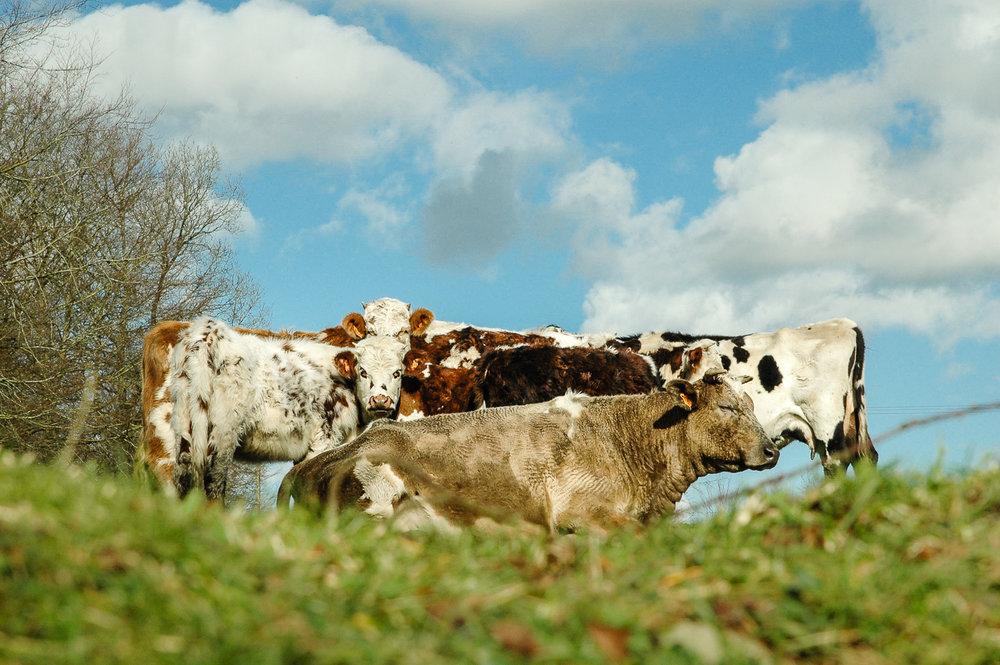 Savourer la vie en campagne
