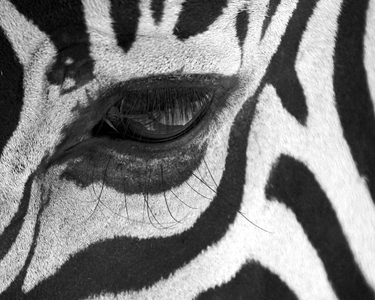 Black & White Eye 3.5x5 - 150.jpg