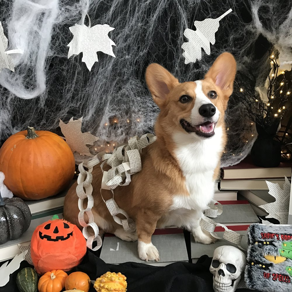 Dylan models for a corgi pin-up calendar. Hello, Mr. October!