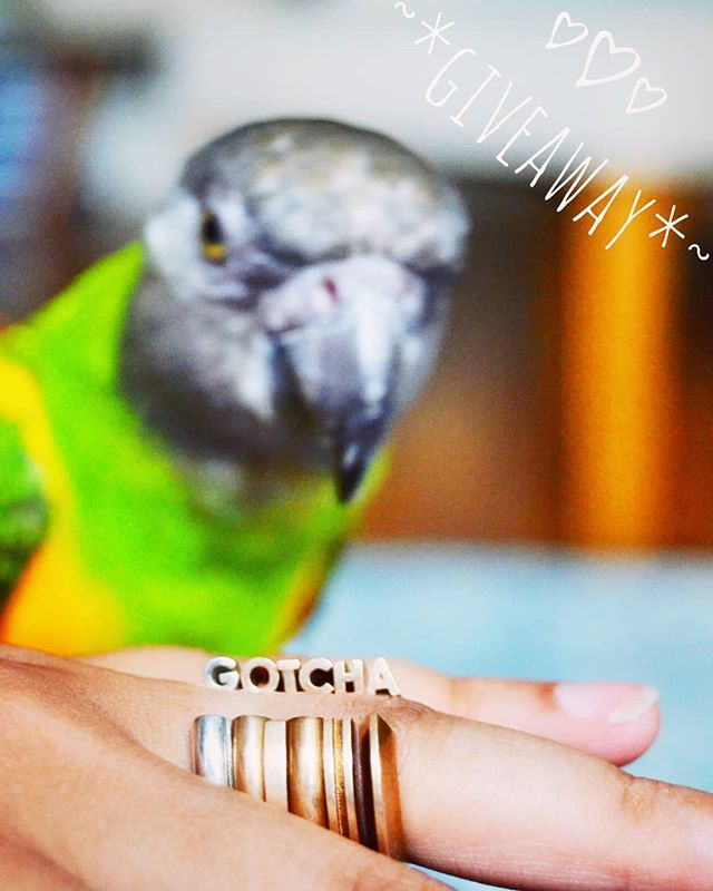 Alaphba's best friend Tango 🐦 @myparrotlife is celebrating his 1 year Gotcha Day anniversary! In honor of this celebration we are doing a giveaway!  The giveaway is open to people living in the 🇺🇸 United States 🇺🇸 Here are the rules to enter: . 1) LIKE this post ❤️ . 2) Make sure you are following BOTH @alephba.jewelry and @myparrotlife 👯‍♂️ . 3) Tag a few friends who might not know us! Each tagged friend counts as an entry, up to three entries counted for each person! 👼👼👼 . 4) For a bonus entry, repost this image with the hashtags #oneyearwithtango and #alephbajewelry 🤗🤗 . Giveaway is open until July 27th, and drawing for the winner will happen over the weekend!  GOOD LUCK Y'ALL! 🍀 #giveaway #jewelry #3dpprintedjewelry