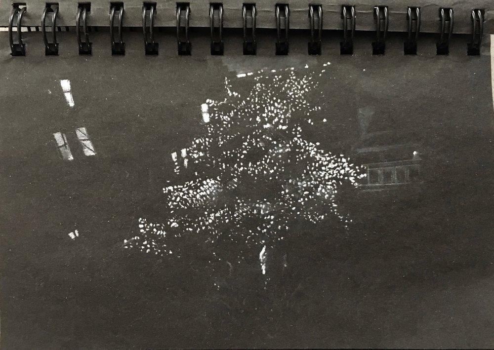 9tree-ally.jpg