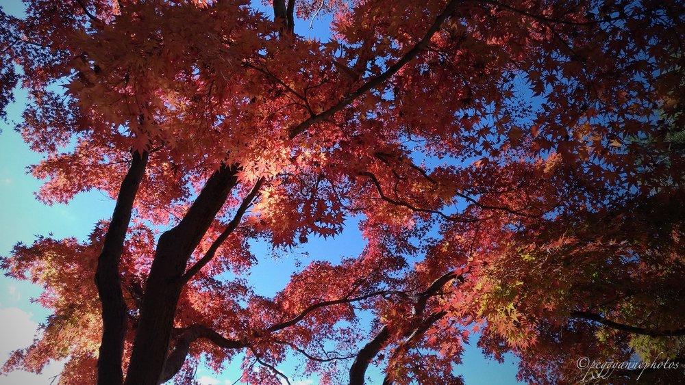 Doho Park 2.jpg