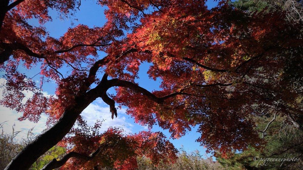 Doho Park 1.jpg
